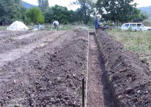 Подготовка участка для посадки малины
