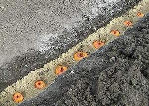 Схема посадки гладиолусов
