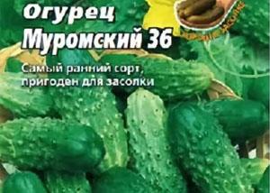 Огурец сорта Муромский