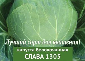 Капуста Слава 1305. Фото