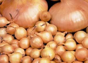 Как правильно хранить лук севок до посадки в домашних условиях